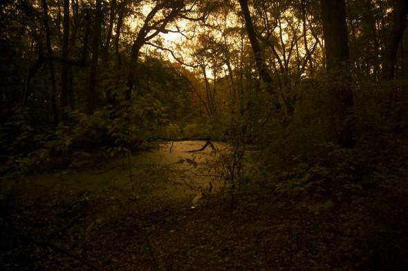 WeldSwamp